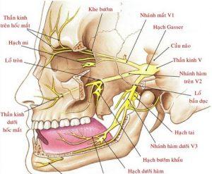 Xung quanh răng khôn là hệ thống dây thần kinh chằng chịt